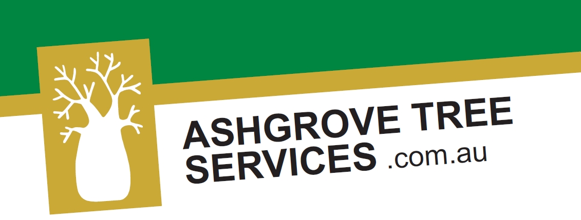 Ashgrove Tree Services – Tree Felling and Tree Removal Brisbane