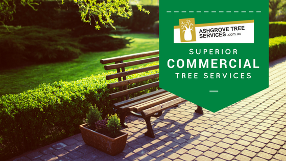 Tree Pruning and removal Brisbane
