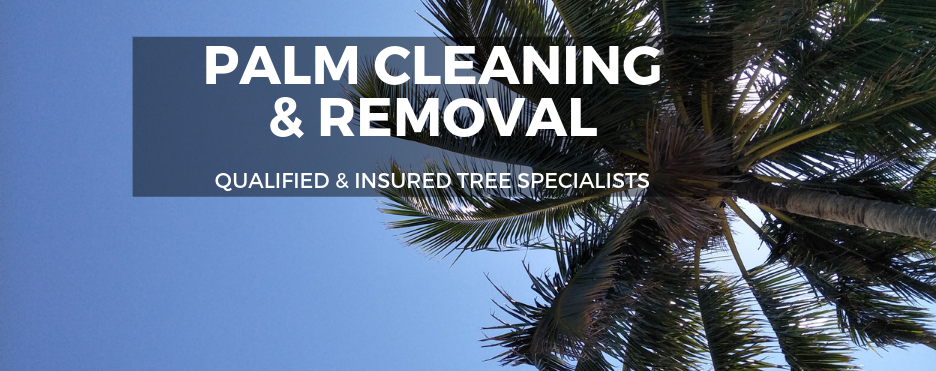 Palm-Cleaning-and-Removal-Brisbane-1