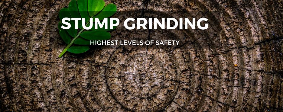 Stump-Grinding-Brisbane